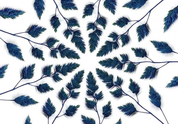 erba blu