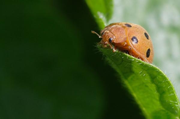 insetto insetti verde curiosita curioso scarafaggio
