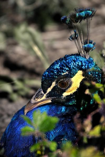 blu verde colorato occhio organo nero