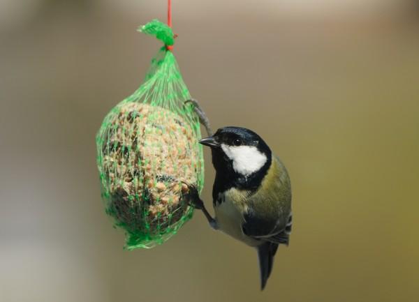 animale uccello fauna uccelli passero natura