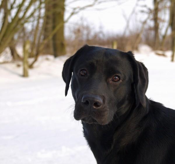 animali domestici orecchie pelliccia cane piazza