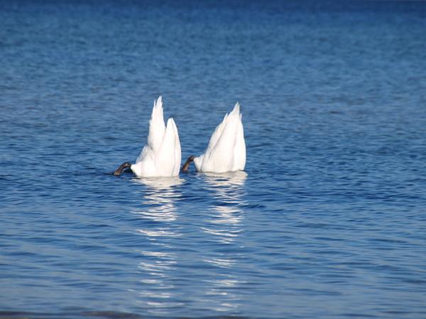 acqua mare del nord acqua salata