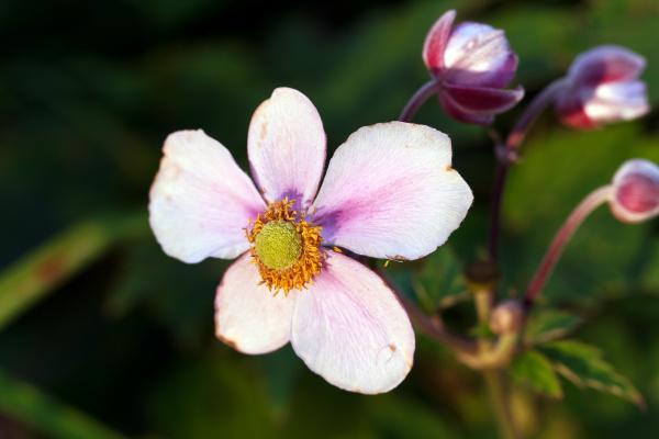 protetto riparato sentimenti albero fiore fioritura