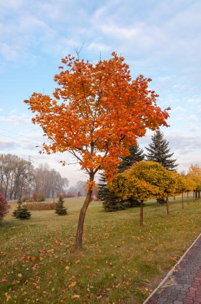 foglia albero natura autunno