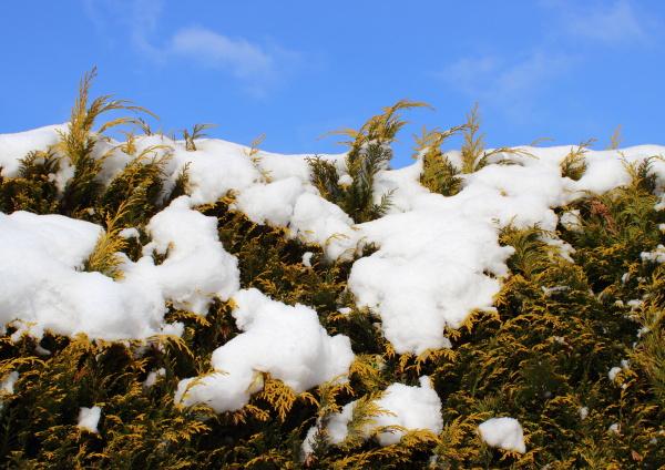 blu dettaglio albero parco giardino inverno
