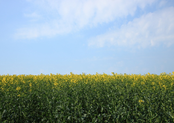 blu agricoltura nuvola fondale di fondo
