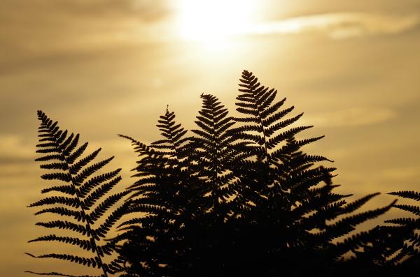 luce della sera sguardo vista sole