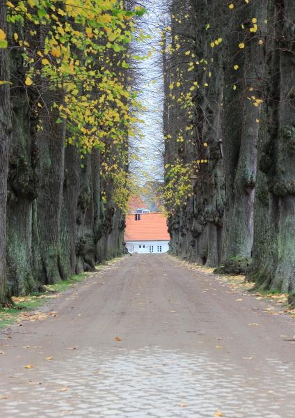 albero parco allaperto fuori direzione viale