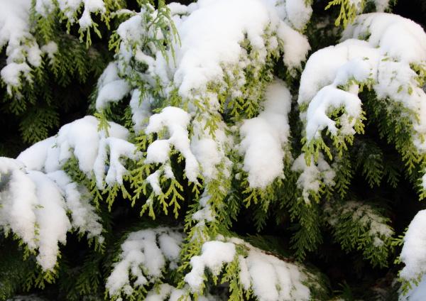 bello bella primo piano inverno nevoso