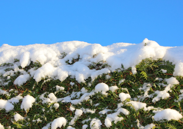 bello bella primo piano inverno verde