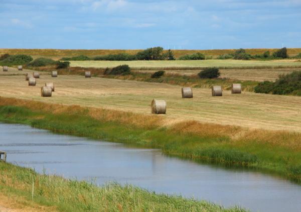 orizzonte industria agricoltura campo estate vendemmia