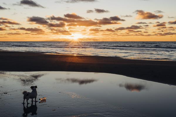 danimarca nord jutland cane sulla spiaggia