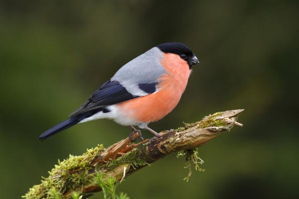 persone popolare uomo umano animale uccello