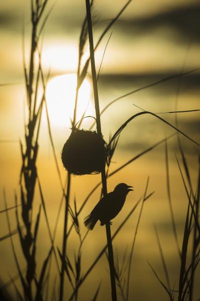 colore parco uccello parco nazionale selvaggio