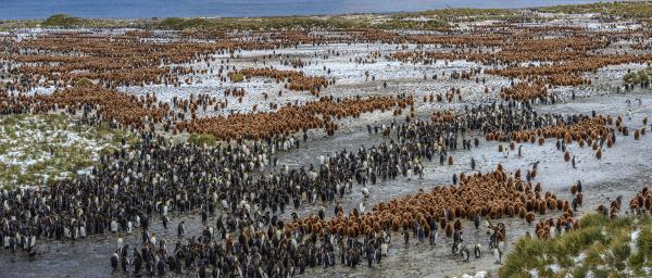 veduta aerea dei pinguini sullisola della