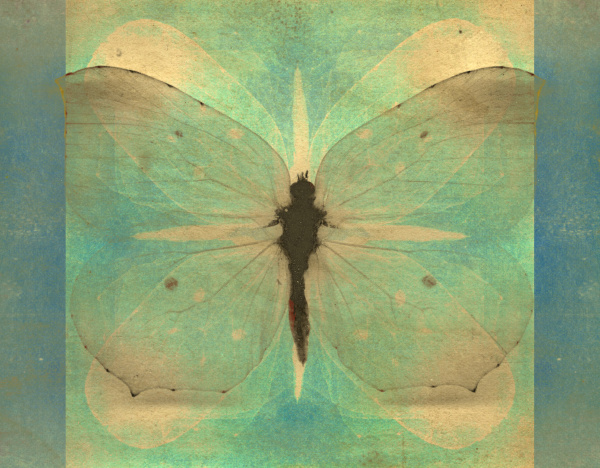 farfalla, vintage - 28215390