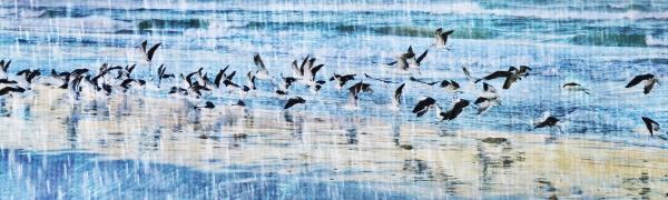 paesaggio, con, gabbiani, sulla, spiaggia, e - 28215155