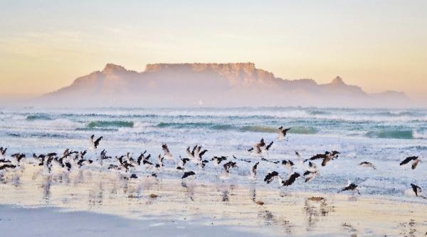 paesaggio, con, gabbiani, sulla, spiaggia, e - 28215156
