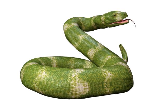 3d, rendering, viper, snake, su, bianco - 28217973