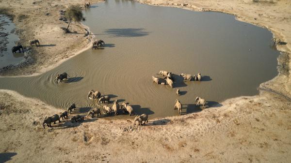 vista drone degli elefanti nella pozza