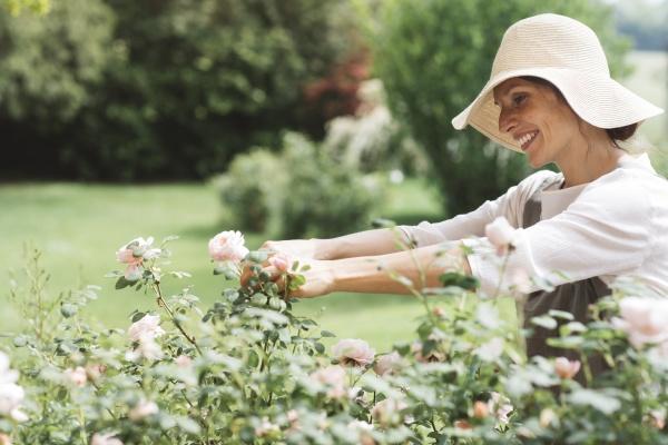 donna sorridente che raccoglie rose in