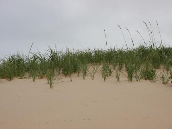 top of sand dune sulla costa