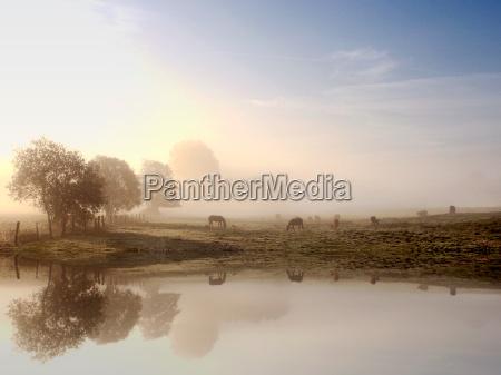 albero alberi campo nebbia alba luce