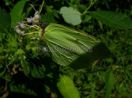 primo piano close up insetti verde