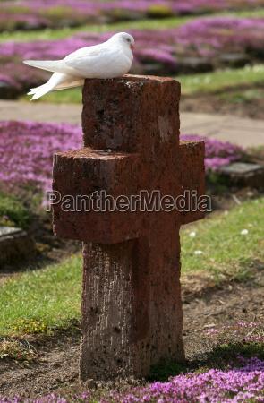 cimitero assia rovina monastero pace piccione