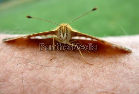 primo piano close up farfalla pelle