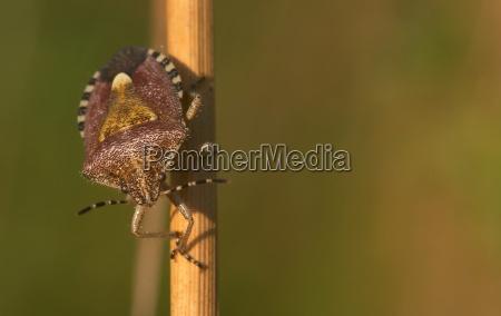 luce primo piano close up insetto
