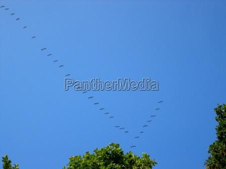 volo sud uccelli migratori autunno