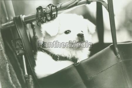 socialmente animali nero caucasico bianco cane