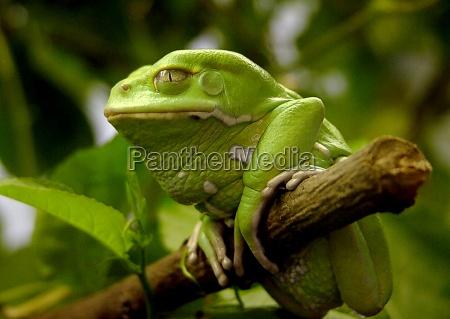 albero animale verde animali guardare osservare