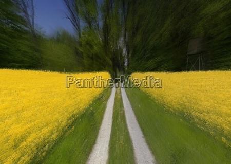 blu viaggio verde colza campo di