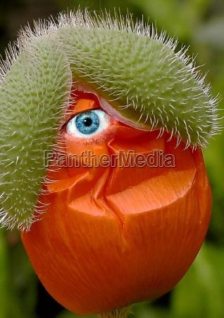 fiore verde fioritura occhio organo divertente