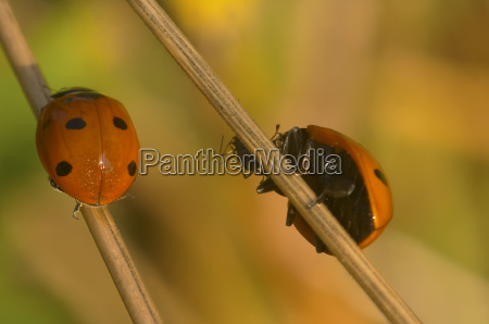 spuntino di ladybug