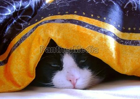 letto coperta sonno addormentato stanco stanchezza