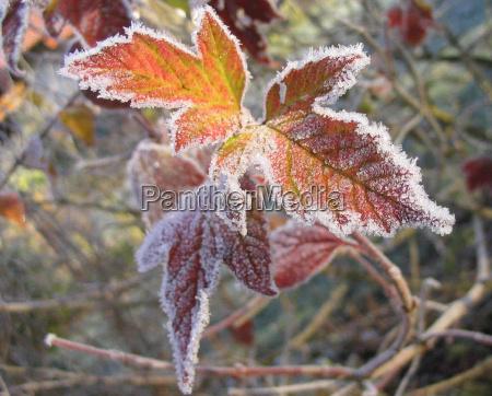 inverno freddo gelo brina ghiacciato dicembre