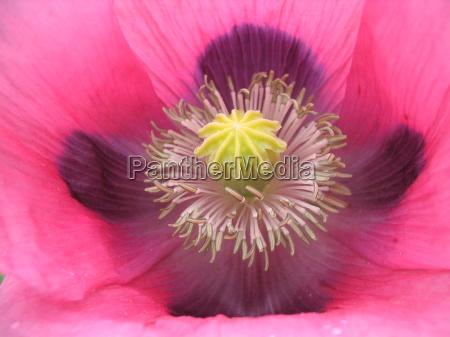 primo piano close up giardino fioritura