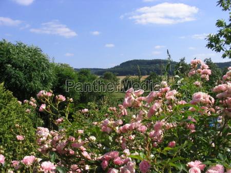giardino estate lontano rose sguardo vista