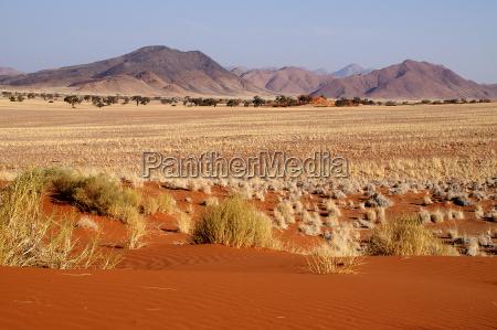 albero alberi montagne deserto africa namibia