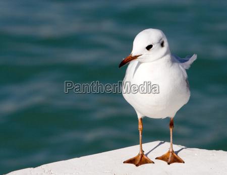 animale uccello sfacciato irrispettoso impertinente rude