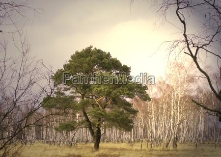 luce albero alberi verde tronco rami