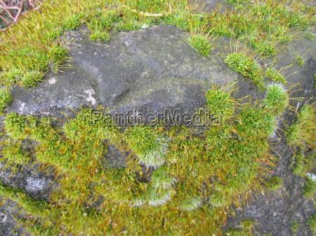 pietra sasso muschio umido ammuffito muscoso