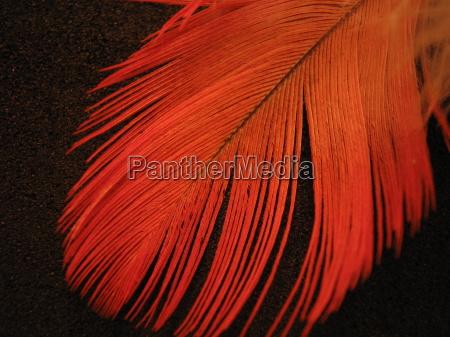 primo piano close up colore uccello