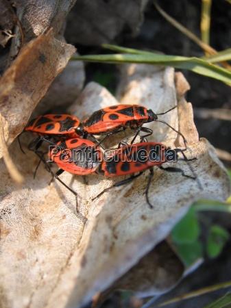insetto strisciare strisciante insetti scarafaggio primavera