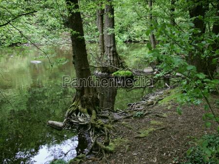 bello bella albero alberi tranquillo radice