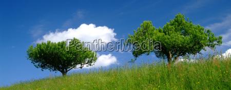 albero con cielo 4