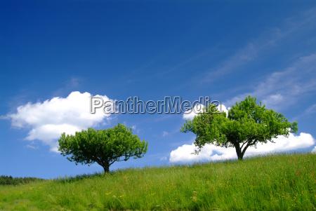 albero con cielo 3